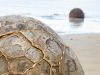 New Zealand, Moeraki (2014): The Moeraki Boulders – huge round stones on the beach; Photo: Thomas Alboth