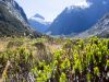 New Zealand, near Milford Sound (2014): On the road to the Milford Sound; Photo: Thomas Alboth