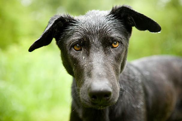 Hungry wet dog in the Daunube Delta (in Romania)