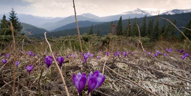 Mount Hoverla Ukrains hightest Mountain