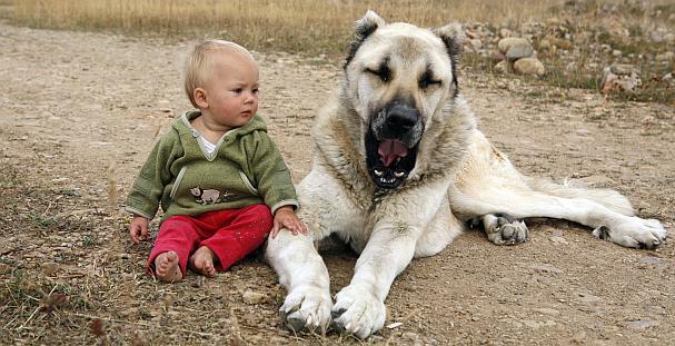 hanna with a dog in Turkey