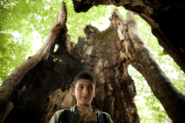 Platan tree Nagorny-Karabakh