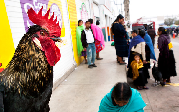 On the market in San-Christobal de las Casas (Mexico, Chiapas); Photo: Thomas Alboth