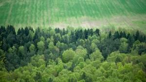 german forest