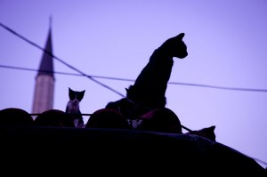 Sarajevo (Bosnia): Cats on the roof; Photo: Anna Alboth