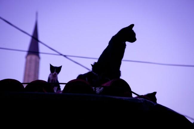 Sarajevo (Bosnia): Cats on the roof; Photo: Anna Alboth