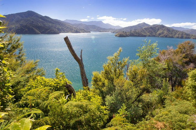 New Zealand: Cook Street near Piction