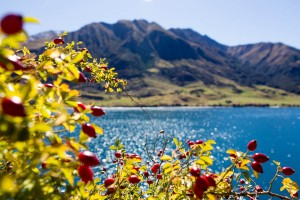 06-New-Zealand-Postcards-lake-berry
