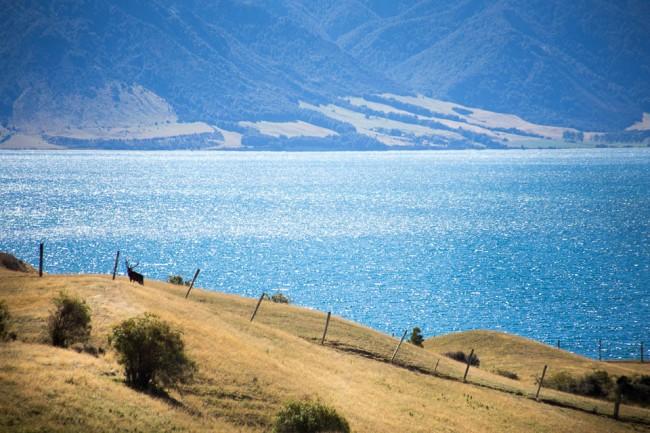 07-New-Zealand-Postcards-lake-dear