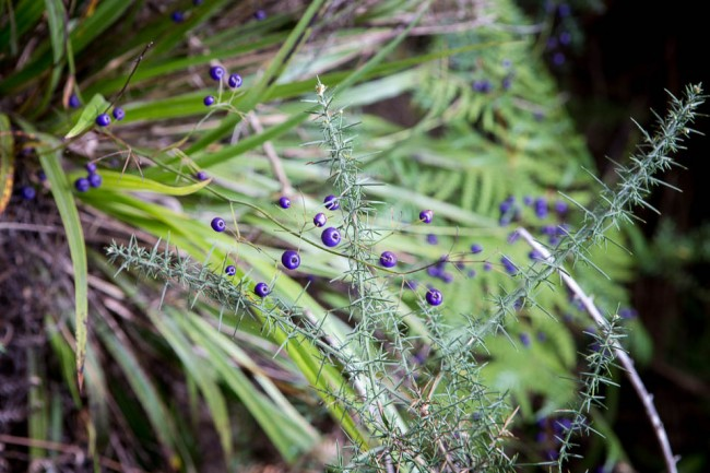Abel Tasman National Park (New Zealand): Plant; Photo: Thomas Al