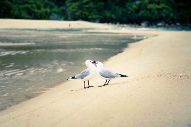 Abel Tasman National Park (New Zealand) seagulls in love; Photo: Anna Alboth