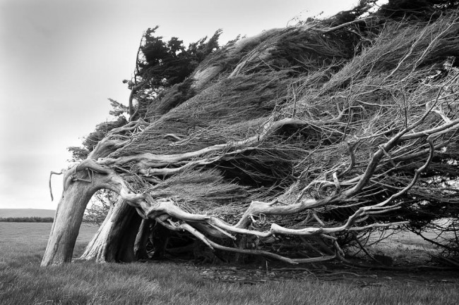 A tree at the windy South coast of New Zealand