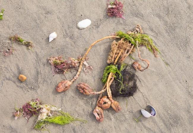 New Zealand: On the beach