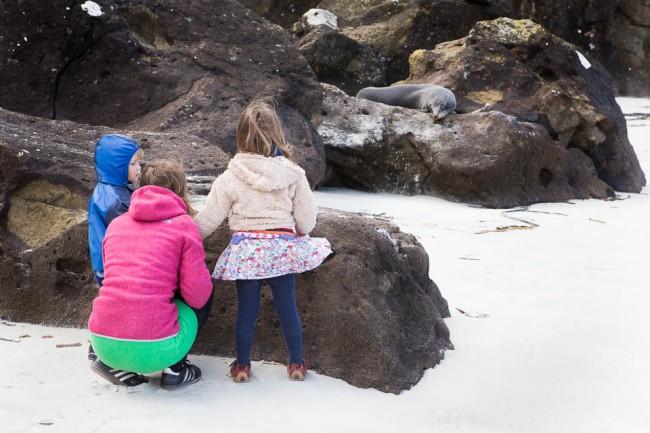 New Zealand: Watching a sea lion near Dunedin