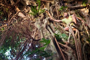 Tonga, Eua Island: Man climbing on the Big 'Ovava Tree (Strangling fig tree)