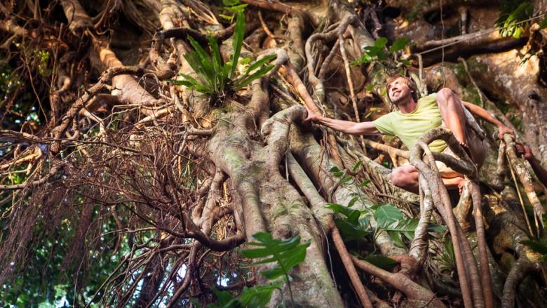 Tonga, Eua Island: Big 'Ovava Tree (Strangling fig tree)