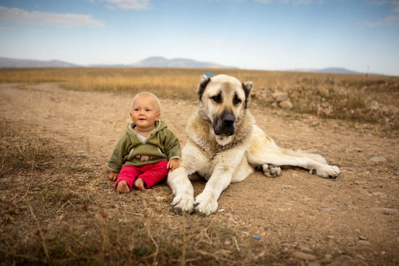 Toddler and a huge dog (East Anatolia, Turkey 2010)