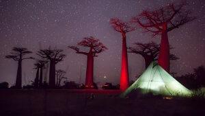 Baobabs Avenue (Magadascar, Morondava)