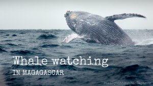 Humpback whale (St. Marie Island, Magadascar, Whale Watching)